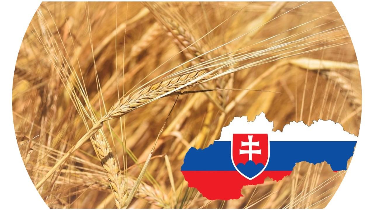 Ilustration photo of barley