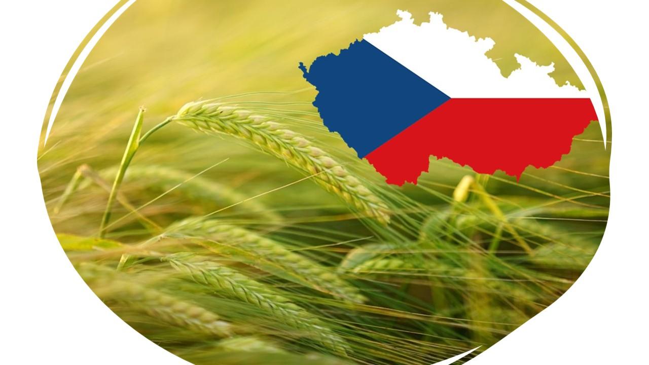 Illustration photo of barley